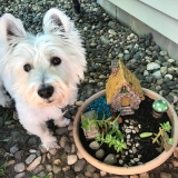 <p>Allison spends time in the summer working on her fairy gardens. Pictured is her gardening helper and pup, Theo.</p>