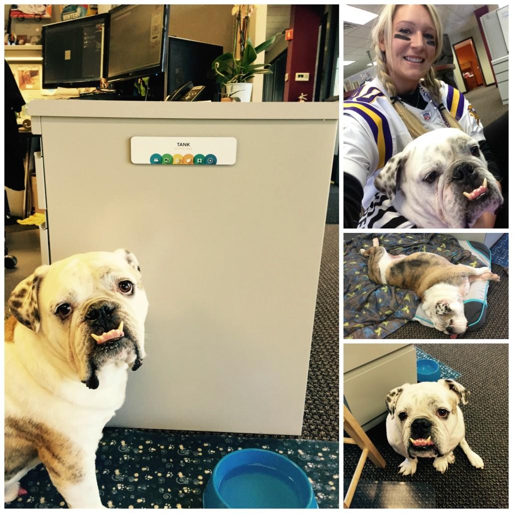 Tank the Office Dog