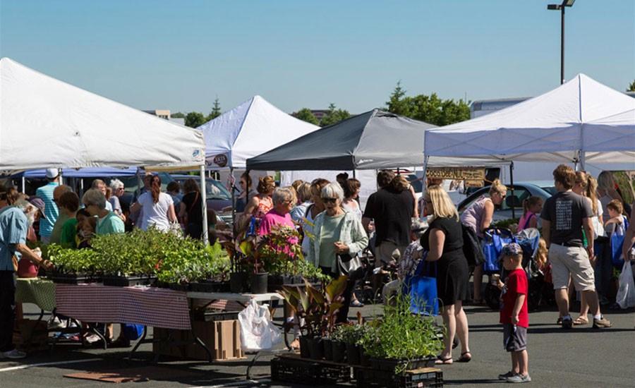 Prime Advertising Client Feature - Maple Grove Farmers Market